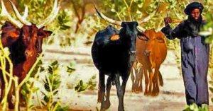 ethnic-fulani-muslim-herdsman-wikipedia